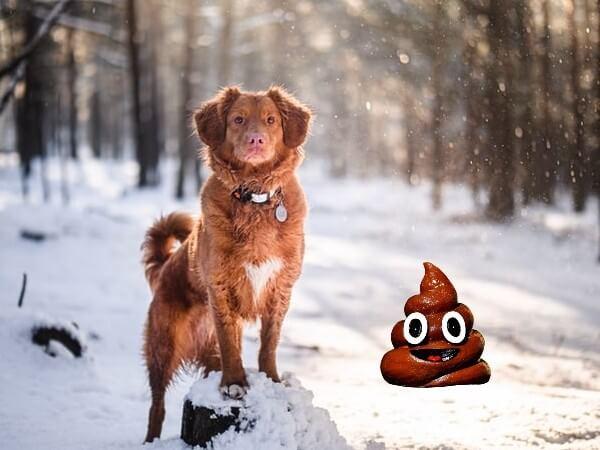 freeze dog poop