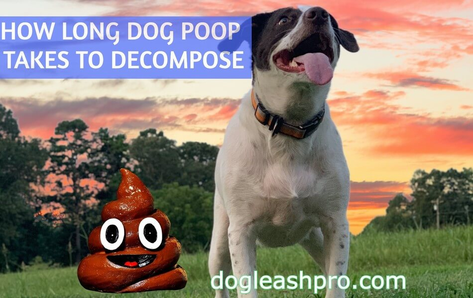 how long does dog poop take to decompose