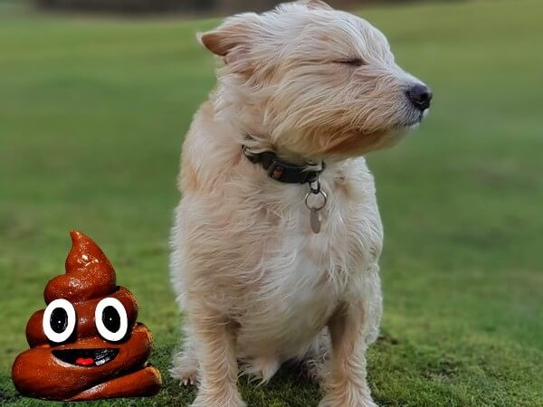 is dog poop good for grass