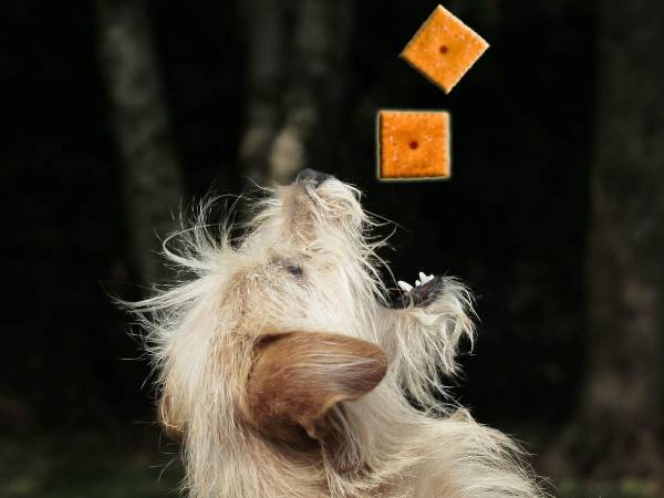 how bad are cheez its