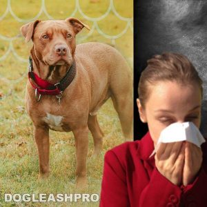 Are Pitbulls Hypoallergenic