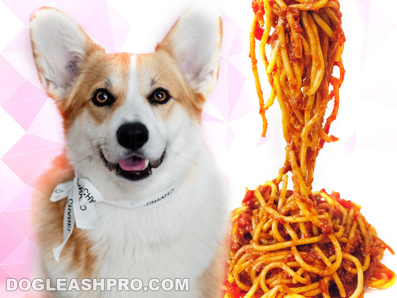 Can Dogs Eat Pasta
