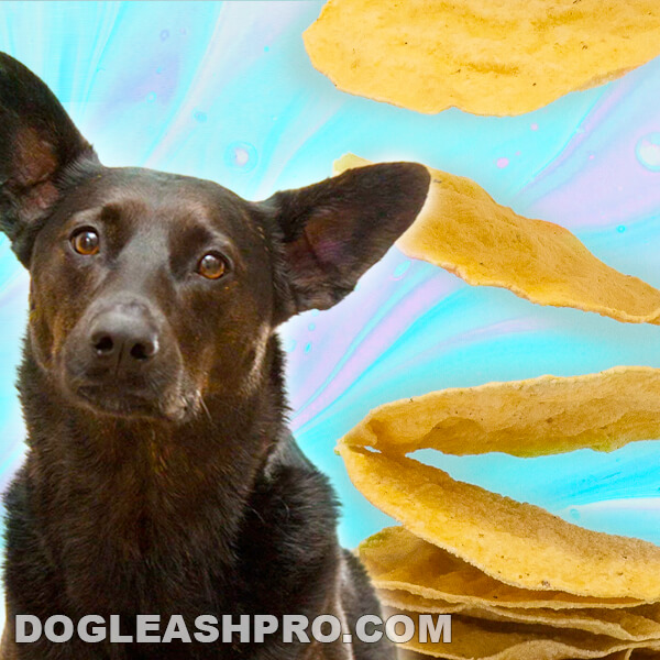 Can Dogs Eat Tortillas