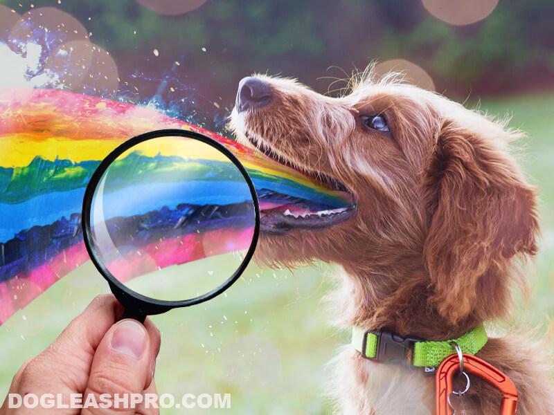 Dog Vomit Color Guide