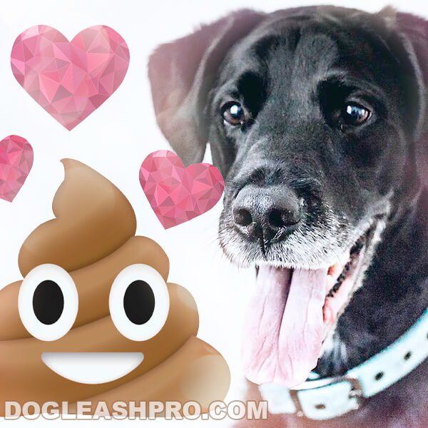 coprophagia in dogs