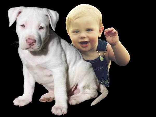 pitbulls and newborn babies