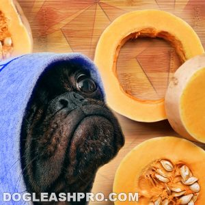 Can Dogs Eat Butternut Squash
