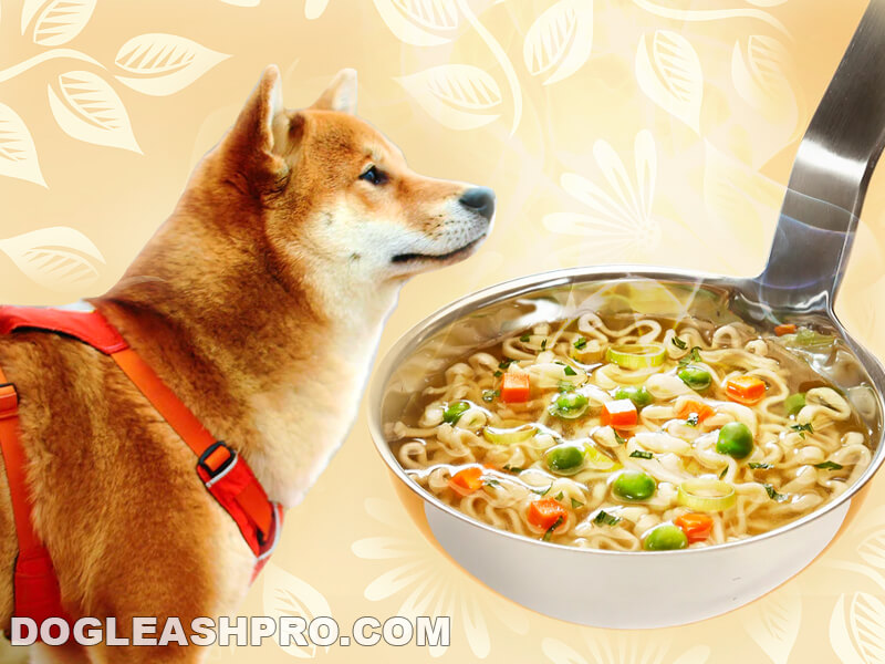 Can Dogs Eat Chicken Noodle Soup