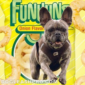 Can Dogs Eat Funyuns