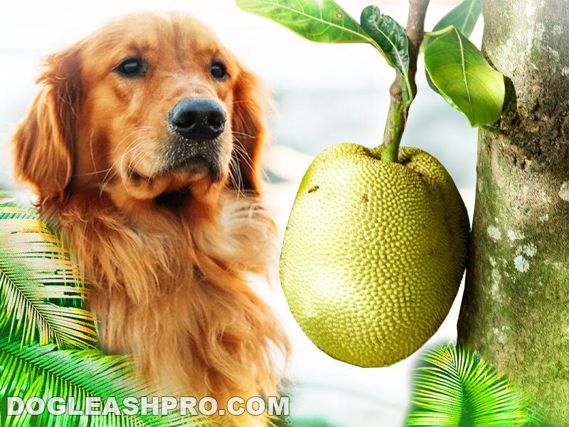 Can Dogs Eat Jackfruit