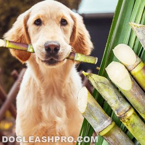 Can Dogs Eat Sugar Cane