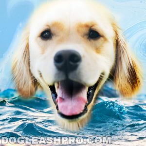 What Can Dogs Drink Besides Water