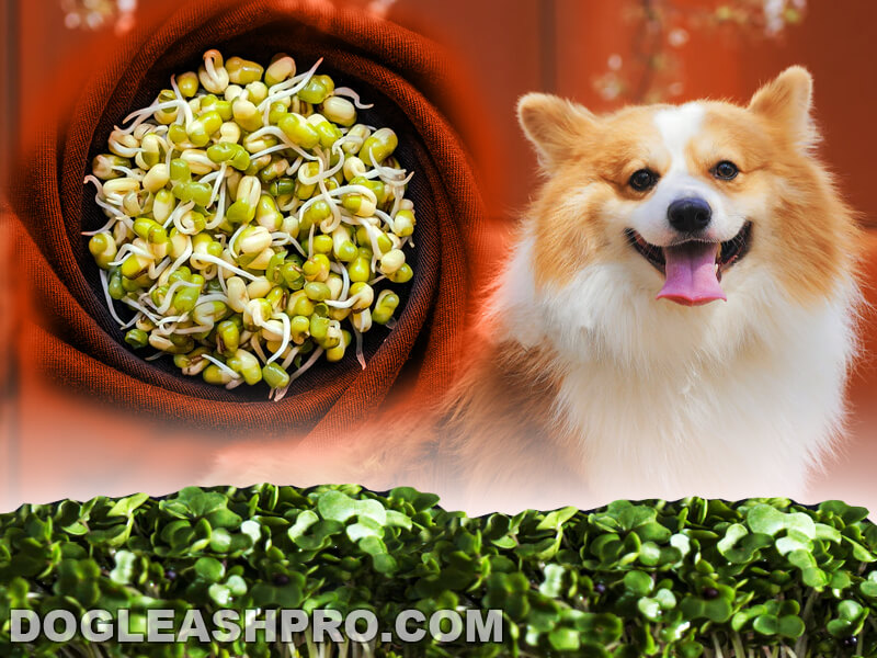 can dogs eat bean sprouts