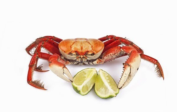 Can my dog eat crab