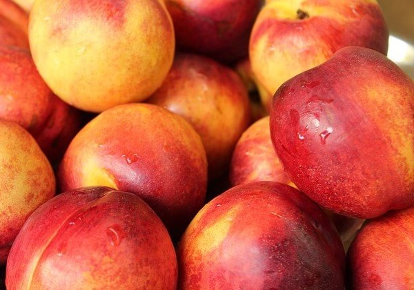 nectarine for dogs