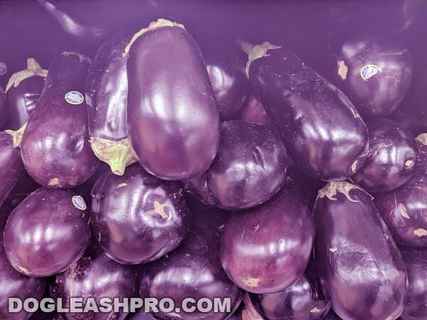 when is eggplant bad
