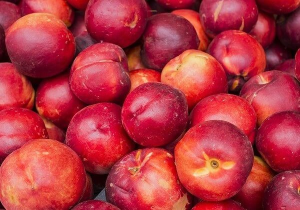 nectarines ok for dogs