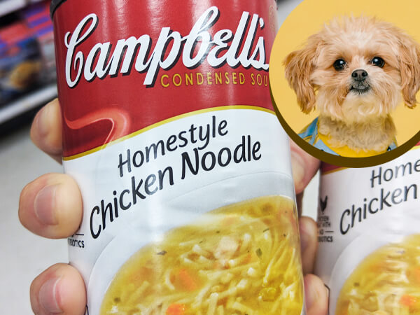 Can Dogs Eat Canned Chicken noodle soup