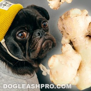 Can Dogs Eat Ginger