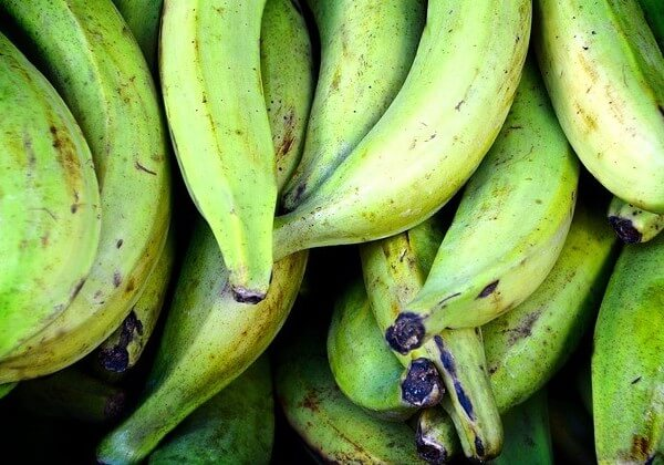 dogs allergic to plantains but not bananas
