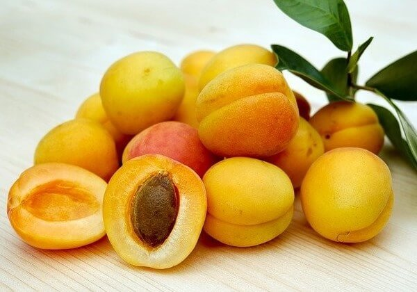 dogs and apricots