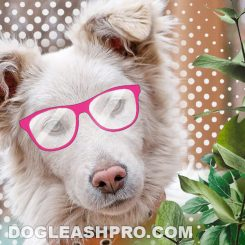 dogs with pink noses