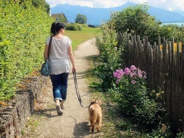 when can you walk your dog after neutering