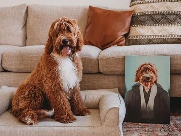 australian double doodle puppies