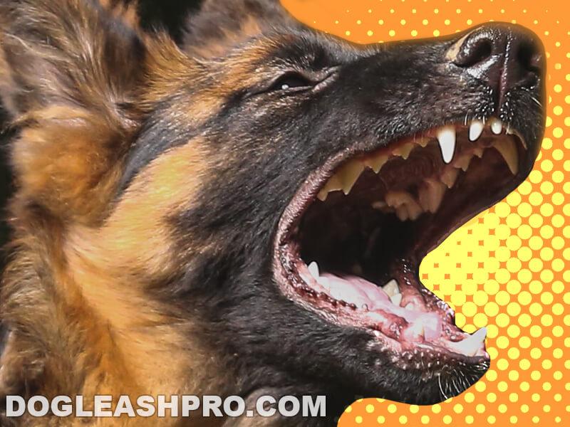 German Shepherd Teeth